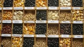 O poder das sementes no processo de emagrecimento